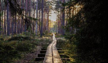 countryside-dawn-daylight-1009355
